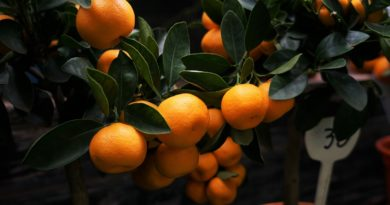 top health benefits of oranges