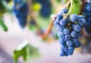 Top Health Benefits of Resveratrol and Quercetin