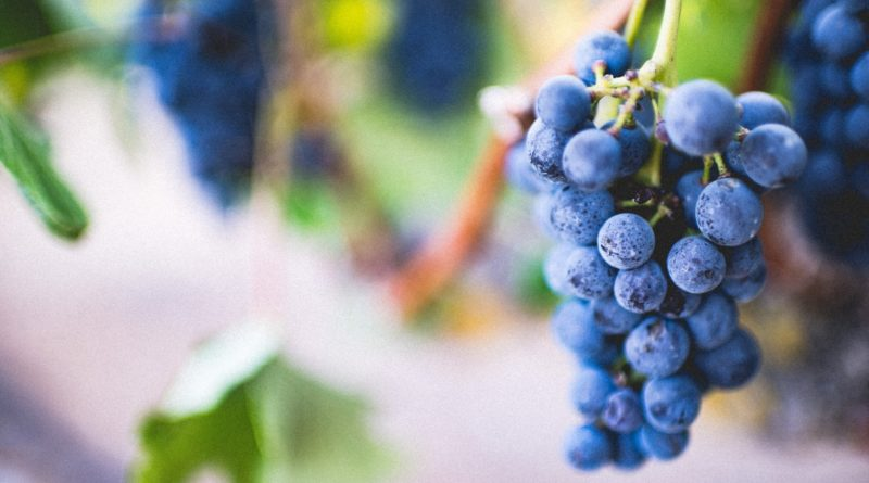 best top health benefits of resveratrol and quercetin